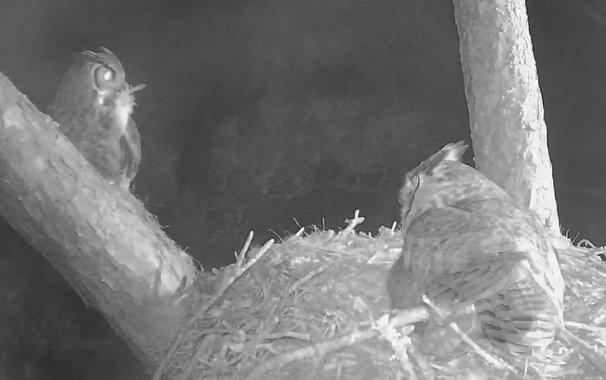 2-25 Dad owl with prey