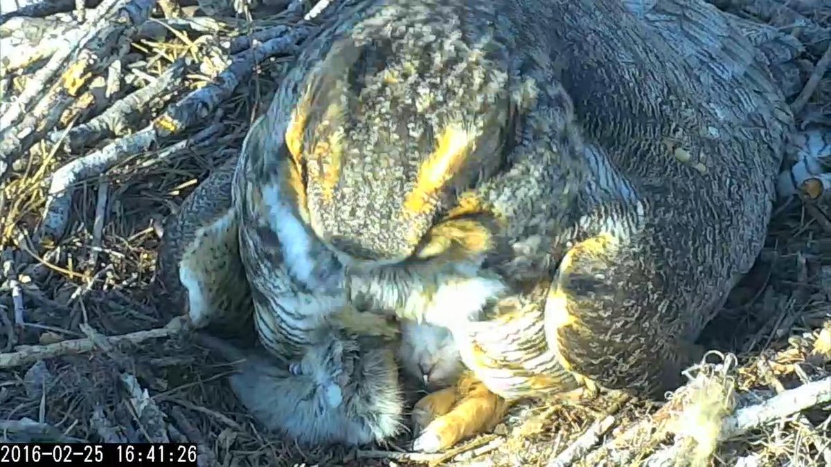 2-25 Momma and chick #1