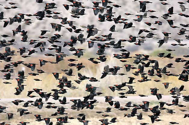 rwb flock