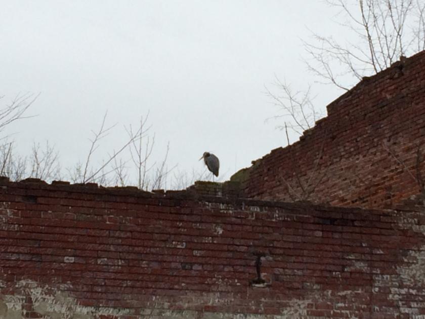 smithville heron