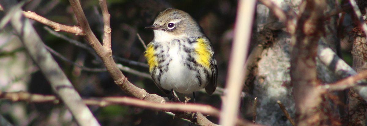 BirdNation