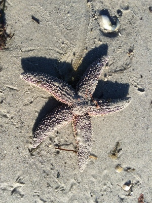 Starfish on the beach (Image by BirdNation)