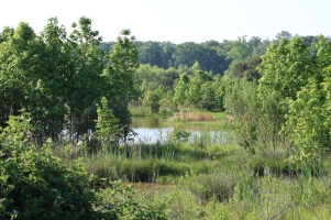 Wetlands Trail at Pickering Creek (Image by BirdNation)