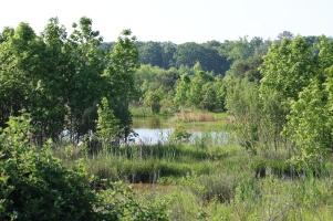 Wetlands Trail at Pickering Creek (Image by BirdNation)