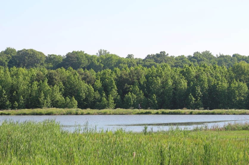 Pond View from the Wetlands Trail (Image by BirdNation)