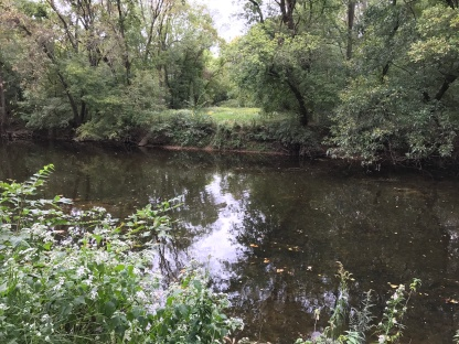 Wissahickon Creek (Image by BirdNation)
