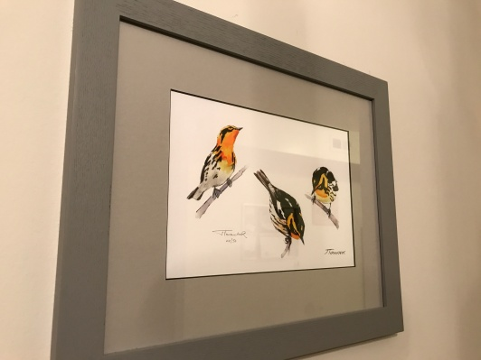 Blackburnian Warbler watercolor by Jim Turanchik