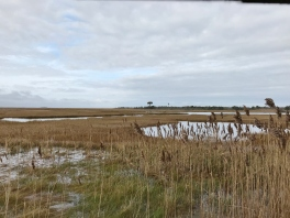 Osprey Pond (Image by BirdNation)