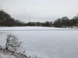 A Frozen Haddon Lake (Image by BirdNation)