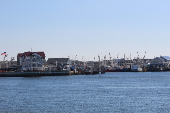 Manasquan Inlet (Image by BirdNation)