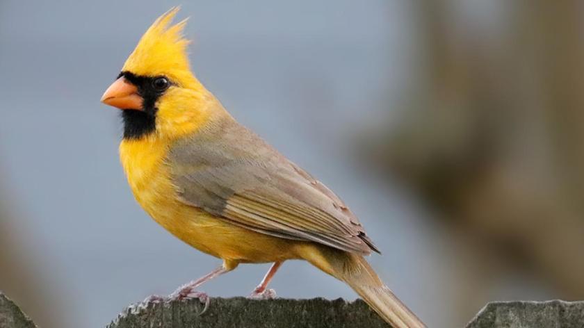 223bird