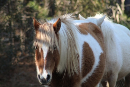 Wild Pony (Image by David Horowitz)