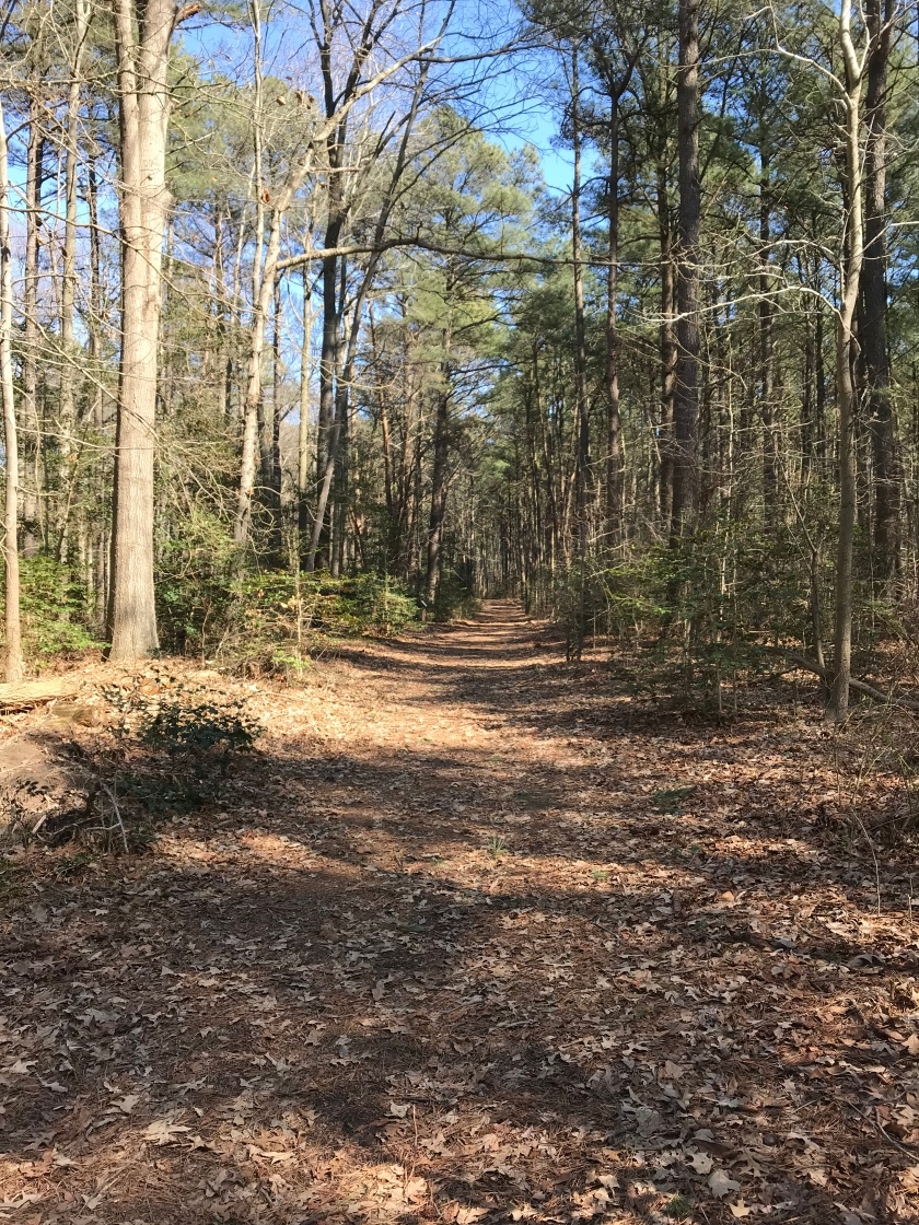 Pine Grove Trail 2