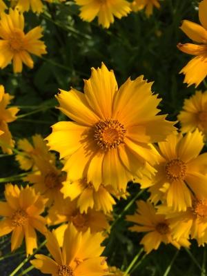 Beautiful Flowers (Image by BirdNation)