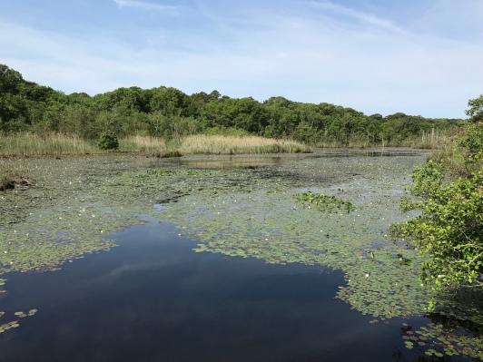 Lily Lake (Image by BirdNation)
