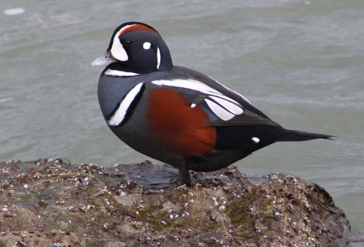 Duck-mas Eve