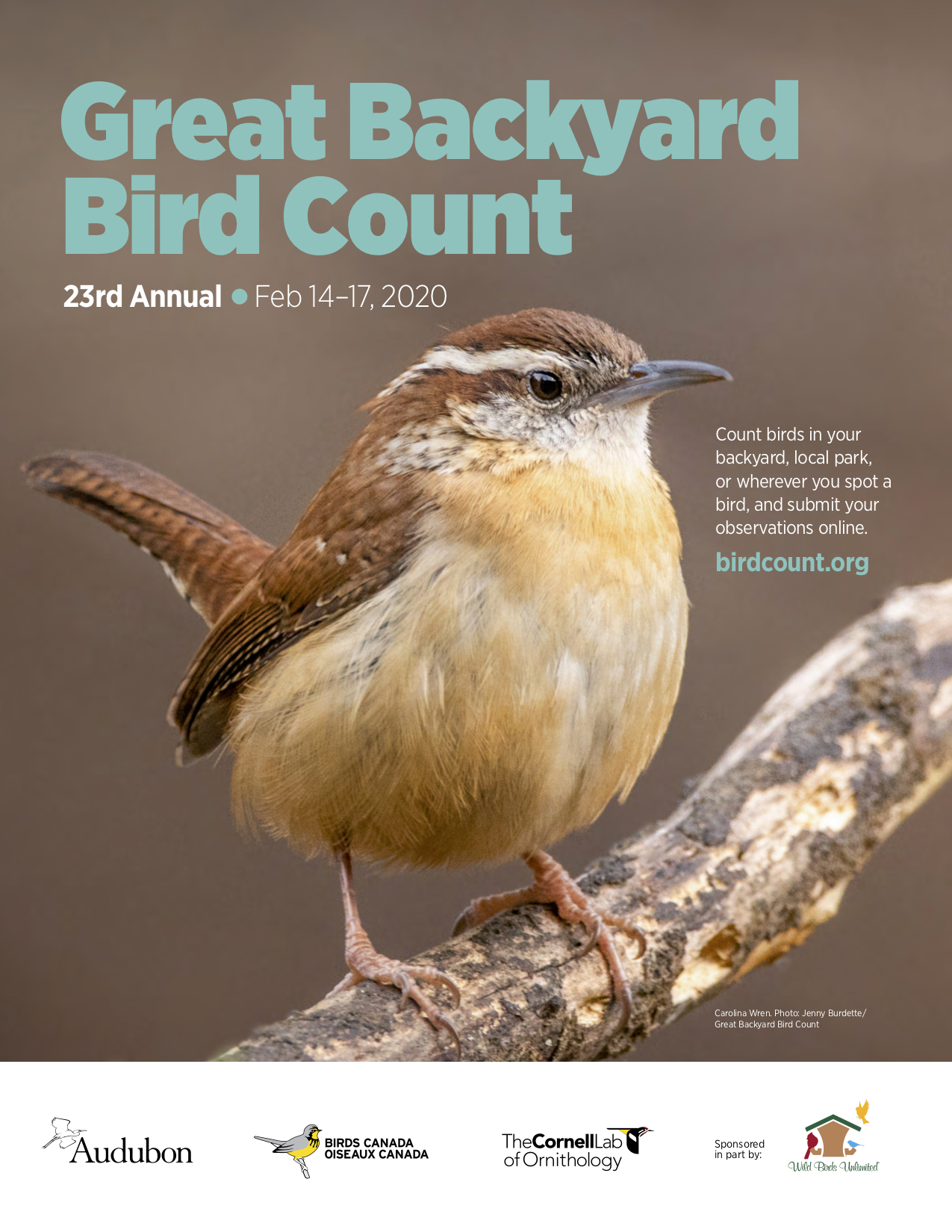 Great Backyard Bird Count 2020! - BirdNation